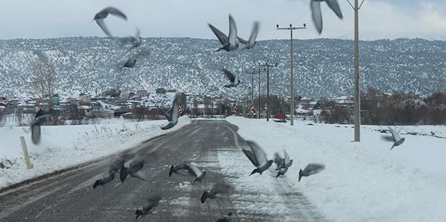 Beyşehir'de aç kalan kuş sürüleri yollara indi