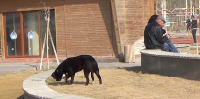 Havlayan köpekten kaçarken hayatını kaybetti