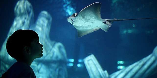 İstanbul Sea Life Akvaryumu açıldı