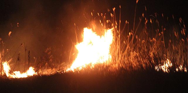 Beyşehir'de sazlık alan yangını