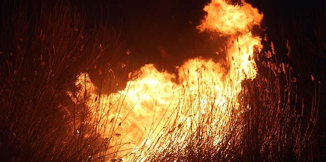 Beyşehir'de sazlık yangını