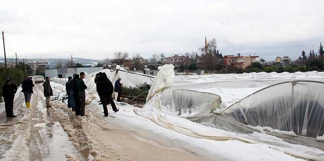 Mersin'de kar yağışı narenciye bahçelerine zarar verdi