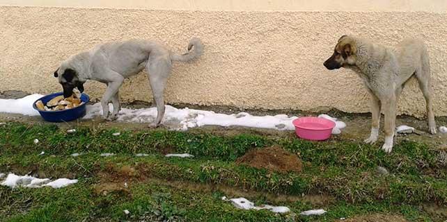 Sarayönü Belediyesi'nden sokak hayvanlarına yem desteği