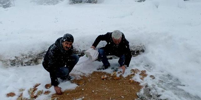 Seydişehir'de yaban hayvanlarına yiyecek bırakıldı