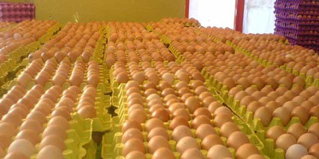Yumurta üreticileri Kayseri'de buluştu