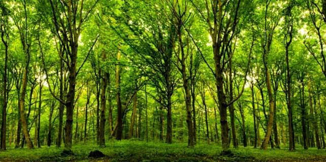 Dünya Ormancılık Haftası