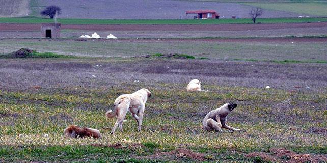 Eskişehir'de köpek vahşeti!