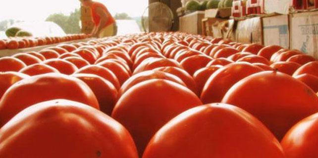 Harran'da hedef '1 milyon ton' domates ihracatı