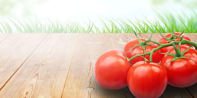 Jeotermalle ısıtılan seralarda üretilen domateslere yoğun talep