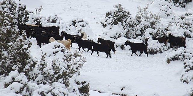 Kar hayvan besicileri zor duruma düşürdü
