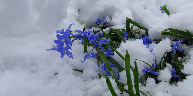 Rize'de mart karı