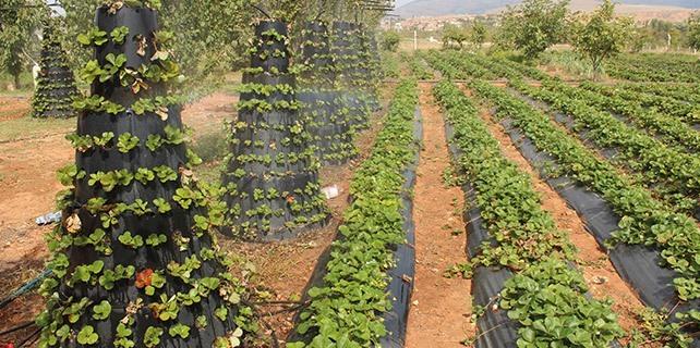 Beyşehir'de ürünler dumanlama yöntemiyle dondan korunuyor