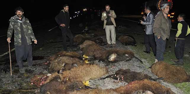 Şanlıurfa'da kamyonetin çarptığı 70 koyun telef oldu