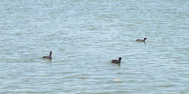 Ulaş Gölü göçmen kuşlarla şenlendi
