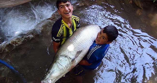 60 kilogramlık balığa yoğun ilgi