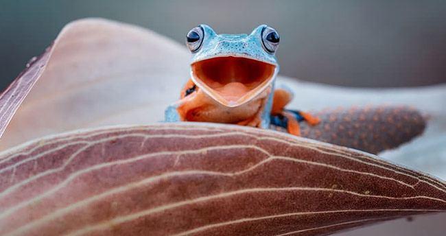 Birbirinden ilginç 25 rengarenk kurbağa