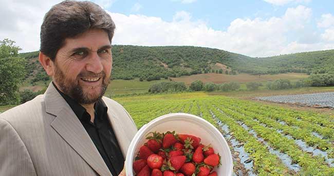 Derbent'te Organik Çilek Çiftçinin yüzünü güldürdü