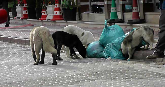 """Konya Kulu'da Sokak Köpekleri İçin """"Yaşa – Yaşat"""" Projesi"""