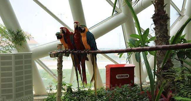 Konya Tropikal Kelebek Bahçesi açılıyor