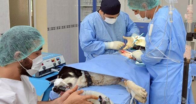 Konya'da Köpeğe Kalça Çıkığı Ameliyatı Yapıldı