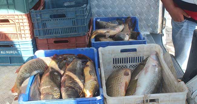 Konya'dan Kuzey Avrupa ve Kanada'ya balık ihracatı