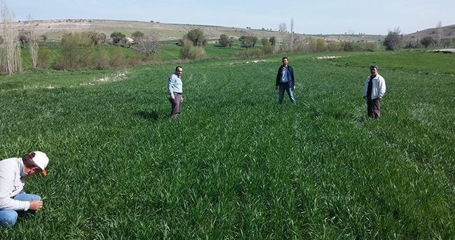 Yağışlar, Beyşehir'de çiftçilerin yüzünü güldürdü