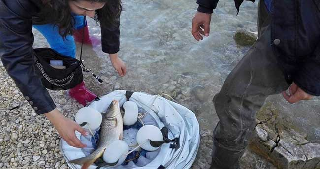 Beyşehir Gölü'nde Ticari ve Amatör Avcılık Faaliyetlerine Sıkı Takip