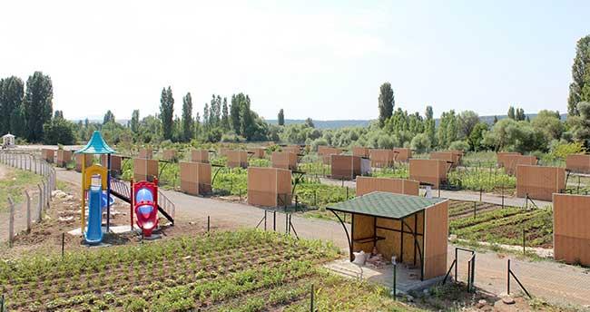 Beyşehir'de Hobi Bahçeleri Meyvelerini Verdi