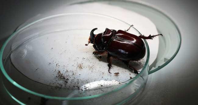 Celal Tuncer: 'Gergedan böceğinin hiçbir maddi değeri yok'
