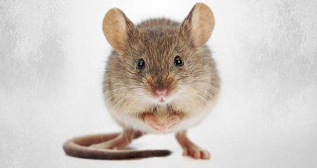 Fas'ta fare paniği: En az 80 yaralı
