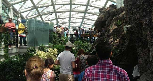 Tropikal Kelebek Bahçesi'ne yoğun ilgi