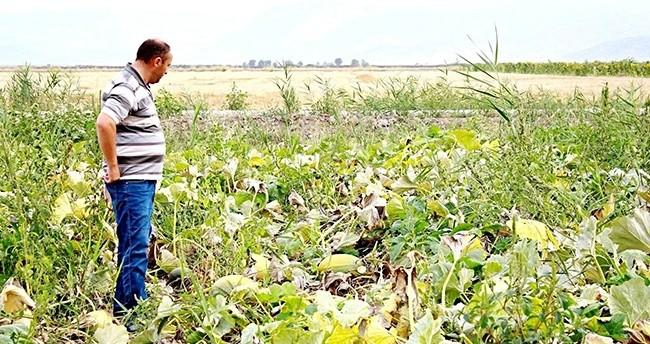 Kabak üretimi Seydişehir'de umut oldu