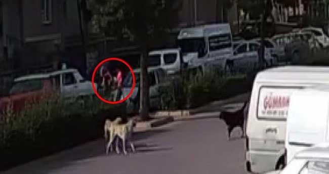 Köpekten korkup kaçan kızlara otomobil çarptı!