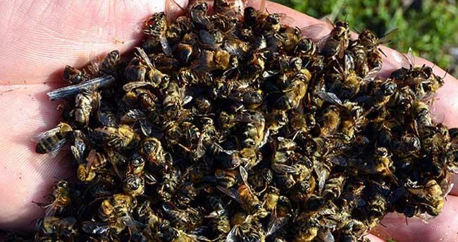 'Türkiye'de arı ölümleri kaygı verici boyutlara geldi