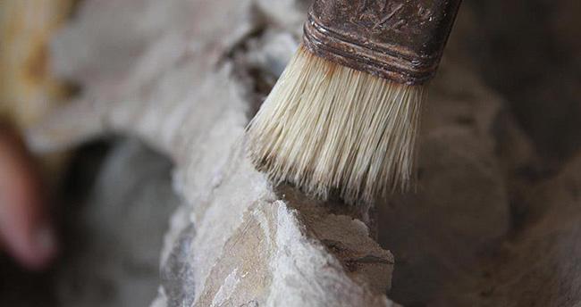 Çankırı'da 'kuyruklu kirpi fosili' bulundu