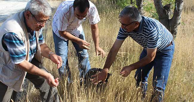 """Karapınar'da """"Mera Tipi Çok Yıllık Yem Bitkisi Çeşitlerinin Islahı"""" projesi"""