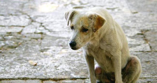 Karatay'da sahipsiz köpekler toplanıyor