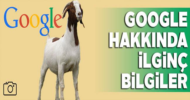 Google ile ilgili ilginç bilgiler