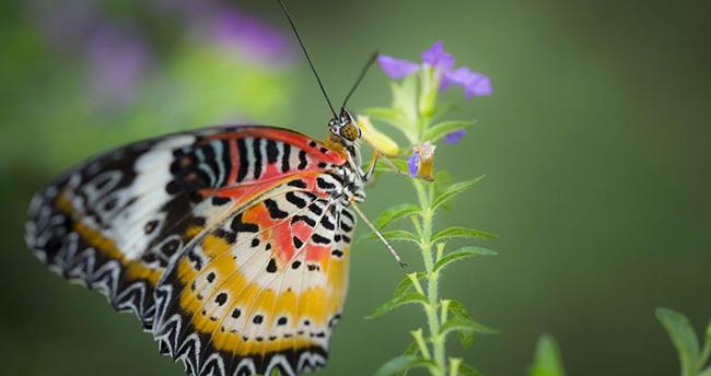 Konya Tropikal Kelebek Bahçesine Yoğun İlgi