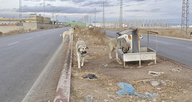 Karatay'da sokak hayvanları için doğaya yem bırakıldı
