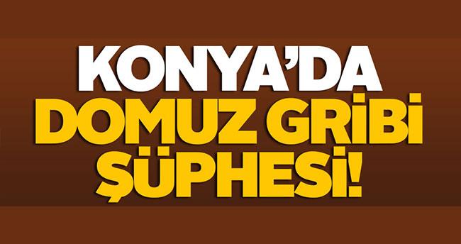 Konya'da domuz gribi şüphesi