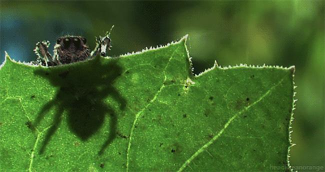 Doğanın en etkileyici hareketli fotoğrafları
