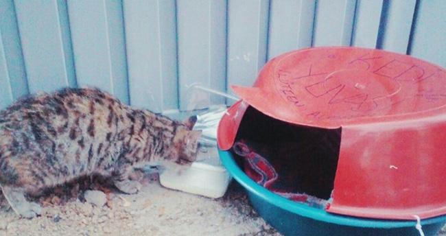 Kedilere ev yaptılar