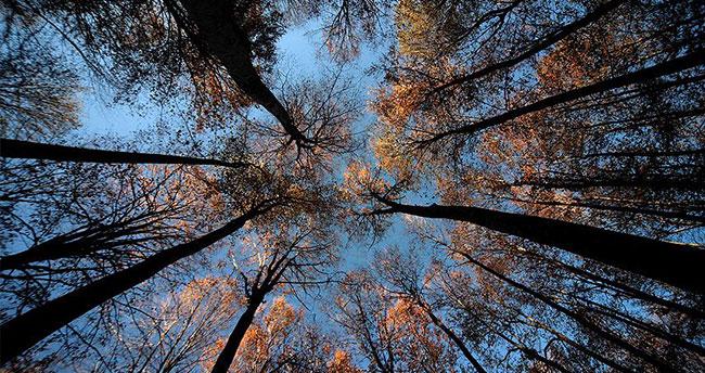 Bu yıl 40 bin 650 hektar alan ağaçlandırılacak