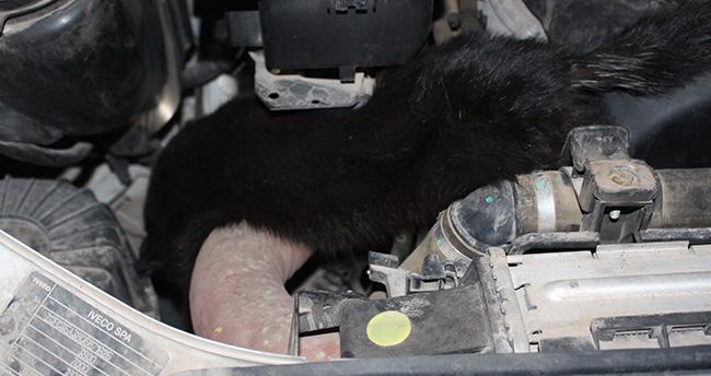 Araba kaportasına giren kedi telef oldu