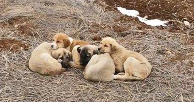 Bu hayvanların suçu ne?