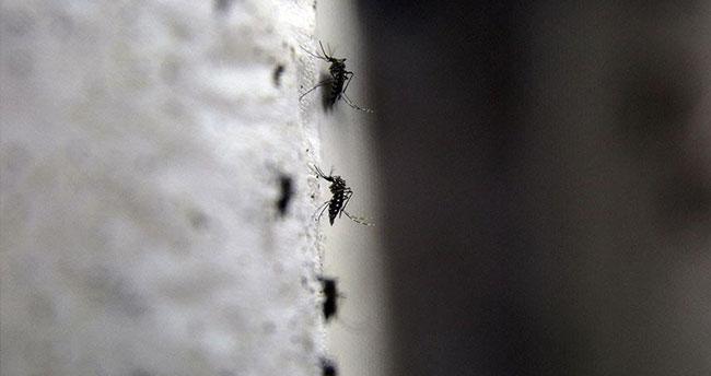 Zika virüsü, Endonezya'da da görüldü