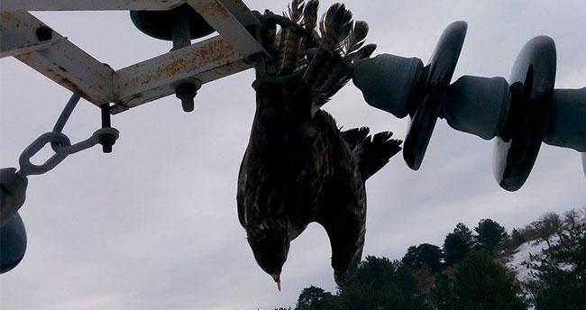 Direğe sıkışan kuş, elektrik kesintisine neden oldu