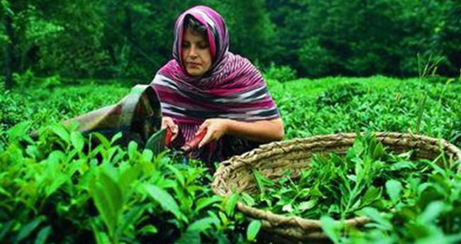 Türkiye'de 1 günde kaç bardak çay içiliyor?