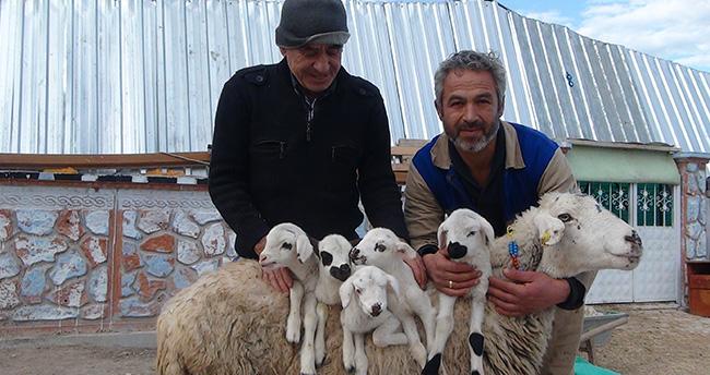 Konya'da beşiz kuzular görenlerin şaşırtıyor